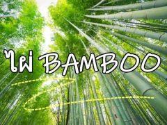 ไผ่, bamboo,